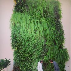 Living-Green-Wall-at-Chicago-branch1. Good website for how-to on vertical garden walls