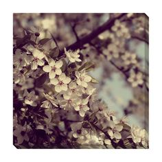 @Overstock - Artist: UnknownTitle: Spring BloomsProduct type: Gallery-wrapped canvas arthttp://www.overstock.com/Home-Garden/Spring-Blooms-Oversized-Gallery-Wrapped-Canvas/7665997/product.html?CID=214117 $127.79