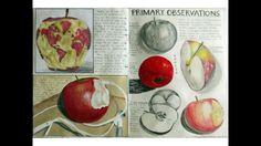 Art gcse sketchbook ideas observation