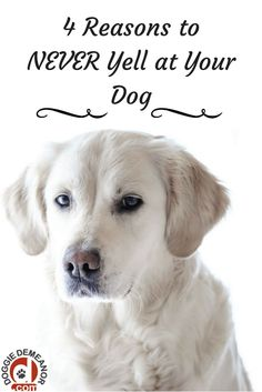 Tips On How To Successfully Train Your Dog. There are lots of tips that can help prepare a dog to go to a show. This article will help you learn the ins and outs of training your dog to be best in sh Dog Health Tips, Pet Health, Dog Care Tips, Pet Care, Pet Tips, Mites On Dogs, Dog Training Tips, Training Classes, Dog Behavior