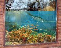 FensterBild Korallenriff