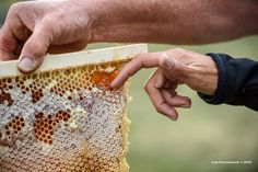 prova di degustazione del miele in una favo di arnia Top Bar