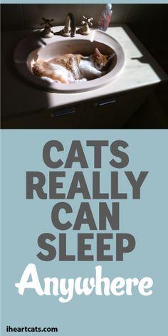 rachael ray nutrish cat food reviews