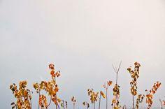 le ultime foglie d'autunno