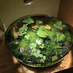 """hippydippywitchy: """" bestfunny: """""""" Omg I love this! It would be super great for a water or nature witch who's landlocked or lives in the city """""""