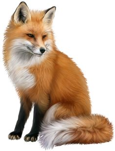 Wildlife Paintings, Animal Paintings, Animal Sketches, Animal Drawings, Animals And Pets, Cute Animals, Fox Collection, Fox Painting, Fox Pictures