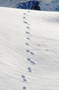 deer tracks #RogersWinterWhites