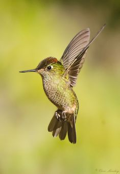 Hummer | by Christopher Alex Momberg Pumarino
