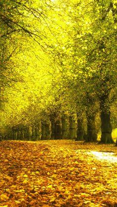 640x1136 Wallpaper Alley Foliage Autumn Trees