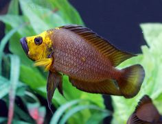Shop In Private at ShopInPrivate com, the world s most private store An online drug store that also sells private items that are embarrassing to buy in person Tropical Aquarium, Saltwater Aquarium, Tropical Fish, Aquarium Fish, Malawi Cichlids, African Cichlids, Tropical Freshwater Fish, Freshwater Aquarium, Aquascaping