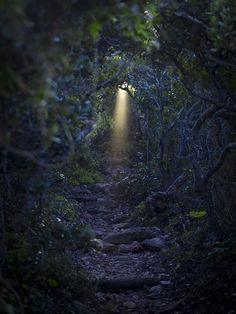 Secret getaway mmmmmmmm!... I love trails with magic... like the beam of light piercing the heavy forest...
