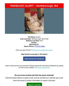 Lost Cat Named Dunkin: Northborough, MA Cat Names, Lost & Found, Pets, Animals And Pets