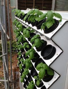 Hydroponics Gardening Basil just starting in our Vertical Aeroponic System Aquaponics System, Aeroponic System, Hydroponic Farming, Hydroponic Growing, Growing Plants, Aquaponics Diy, Aquaponics Greenhouse, Vertical Hydroponics, Magic Garden