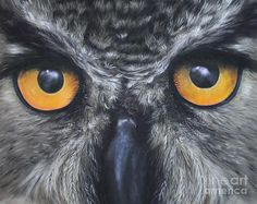 Oil pencils and pastels - gorgeous owl!