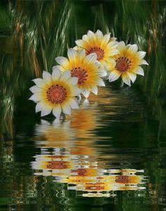 Good Morning Beautiful Flowers, Amazing Flowers, Flowers Gif, Exotic Flowers, Sunset Wallpaper, Rose Wallpaper, Nature Pictures, Beautiful Pictures, Spring Scenery