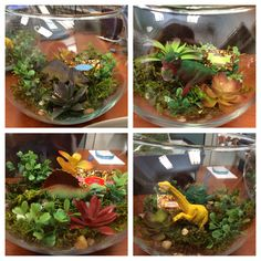 Birthday Centerpiece Dinosaur Terrariums Dino Party