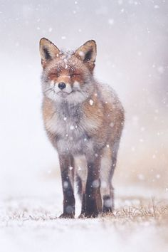 Ideas wild nature animals beautiful creatures for 2019 Nature Animals, Animals And Pets, Baby Animals, Cute Animals, Animals In Snow, Wild Animals, Beautiful Creatures, Animals Beautiful, Tier Fotos