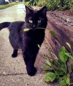 Cats Of Instagram, Instagram Posts, Cat Day, Cat Lovers, Kittens, Nature, Black Cats, Natural Person, Animales