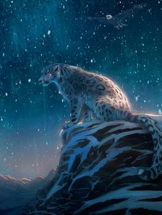 Stunning Clouded Snow Leopard on a Starry Night. Snow Leopard Drawing, Snow Leopard Tattoo, Leopard Tattoos, Beautiful Cats, Animals Beautiful, Cute Animals, Anime Animals, Big Cats Art, Cat Art