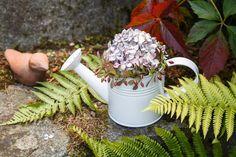Květinová aranžmá ze sušených květin udělají radost po delší dobu. Využijte k nim pěkné předměty, které třeba aktuálně nepoužíváte. Nebo si pořídit třeba tuhle krásnou konvičku z našeho e-shopu.