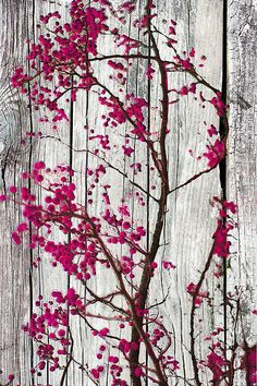 Pink Crab Apples, print by Suzanne Powers $27.00