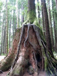 Redwood Park, Arcata, CA. will probably end up making a board just for tree stumps,i pin so many