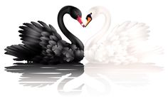 White and black swans with heart shape clipart 0