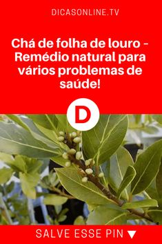 Chá de folha de louro | Chá de folha de louro – Remédio natural para vários problemas de saúde!