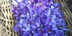 #Provence Local saff