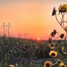Sunset & Sunflowers in #Fargo #NorthDakota #VisitFM via @visitfm on Instagram