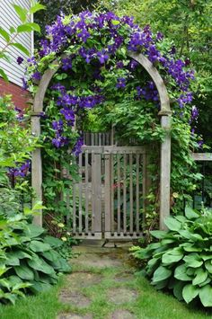 Arbor gate with purple climbing Clematis