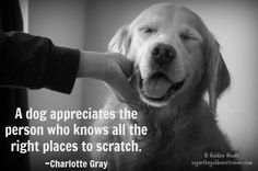 36 Best Top Pet Quotes images in 2016   Dog cat, Doggies, Cats