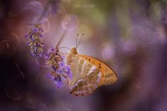 The magical world of butterflies, series by Pier Luigi Saddi on 500px