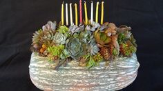 Commissioned piece for Tifereth Israel Synagogue. Photo/Designer Laura Eubanks Design For Serenity Succulent Arrangements, Menorah, House Plants, Hanukkah, Serenity, Israel, Pots, My Design, Cactus