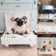 DIY Hundekörbchen aus altem Koffer