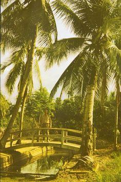 1988-1989, Unter Kokospalmen in Südvietnam;              1988-1989, under coconut palms in South Vietnam;