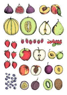 Fruits illustration by May van Millingen