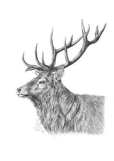 A Red Deer Buck by Tegnekroken-ITAF.deviantart.com on @DeviantArt