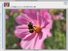 Alien Skin Bokeh 2 review | Plug-in software publisher Alien Skin made its name long ago with its striking Eye Candy effects for illustrators and designers, but the company also publishes a range of photo enhancement tools, and Bokeh 2 is just one of those programs. Reviews | TechRadar