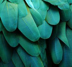 Fabulous jade, and aqua feathers