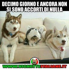 Decimo giorno e ancora non si sono accorti di nulla :D (www.VignetteItaliane.it)