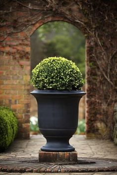 Fabulous urn with boxwood.                                                                                                                                                                                 Mehr
