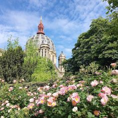 Blue skies warm days and absolute beautiful roses in bloom - aside from the rain summer is on its way  #Paris #France #roses #madefromscratch