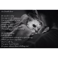 "The ""words"" of a shelter animal... Please adopt and save a life... I did, and got saved right back."