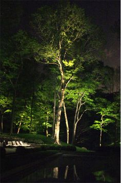 View a variety of garden lighting ideas along with products to get the look. outdoor lighting ideas, backyard lighting ideas, frontyard lighting ideas, diy lighting ideas, best for your garden and home Outdoor Tree Lighting, Outdoor Lighting Landscape, Landscape Lighting Design, Outdoor Trees, Backyard Lighting, Outdoor Landscaping, Outdoor Gardens, Lighting Ideas, String Lighting