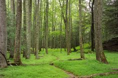 A Woodland Path in the Forest by Cades Cove in the Smokey Mountains - A Landscape Photograph MULTIPLE SIZES and PRICING: See dropdown menu on