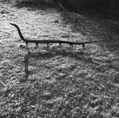 Joan Foncuberta  Serpent vertébré à 12 pattes
