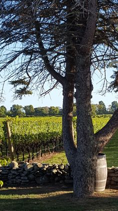 Newport Vineyards set the perfect backdrop for a client appreciation dinner and presentation.