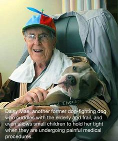 Daisy Mae, another former dog-fighting dog who cuddles with the elderly and frail, and even allows small children to hold her tight when they are undergoing painful medical procedures.  Dog were meant to love... they have to be taught to hate and fight.   <3 <3 <3