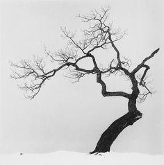 Michael Kenna est anglais et vit actuellement aux Etats-Unis. Il est mondialement connu pour ses photographies essentiellement en noir et blanc ou l'on peut admirer des paysages très épurés à l'atmosphère intimiste et romantique. Michael Kenna a publié...